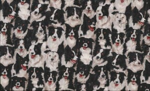 Timeless Treasures Border Collie Grey Fabric