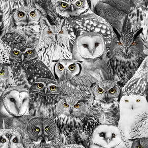 Timeless Treasures Wicked Owl Eyes Fabric