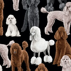 Timeless Treasures Poodles Black Fabric