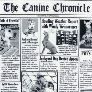 Small Image of Timeless Treasures Dog Fabric Doggy Newspaper